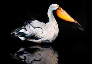 Pelican Bodypainting Gesine Marwedel