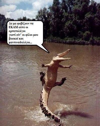 sifis_krokodeilos