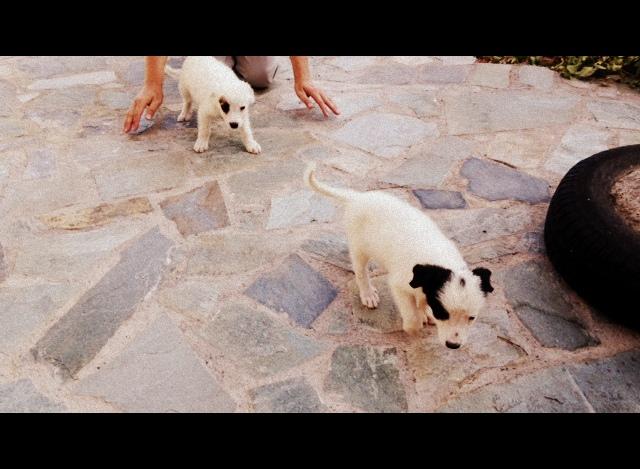 σκυλάκια-001