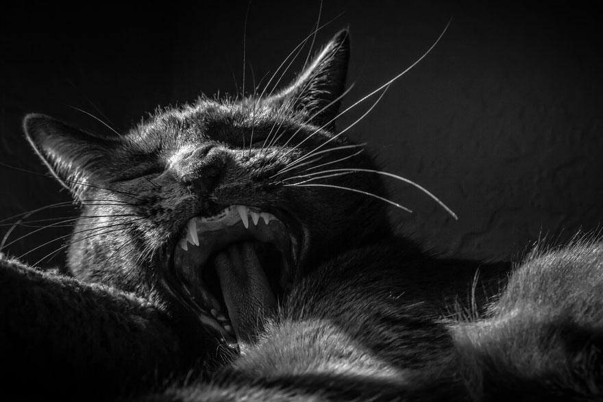 blackcat11
