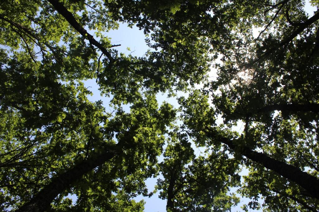 """""""Ένα από τα δέντρα που έκοψαν ζύγιζε μόνο του 30 τόνους. Πριν το κόψουν έβγαλαν φωτογραφία 3-4 που το αγκάλιαζαν, τόσο μεγάλο ήταν και τόσο μεγάλο ήταν το θράσος τους"""", μας είπε ντόπιος."""